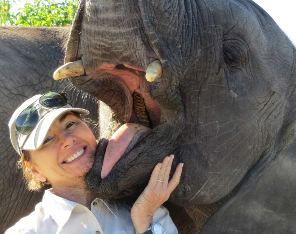 Debra Stevens Elephant Havens