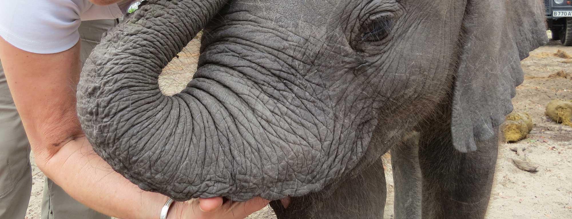 Elephant Havens Debra Stevens