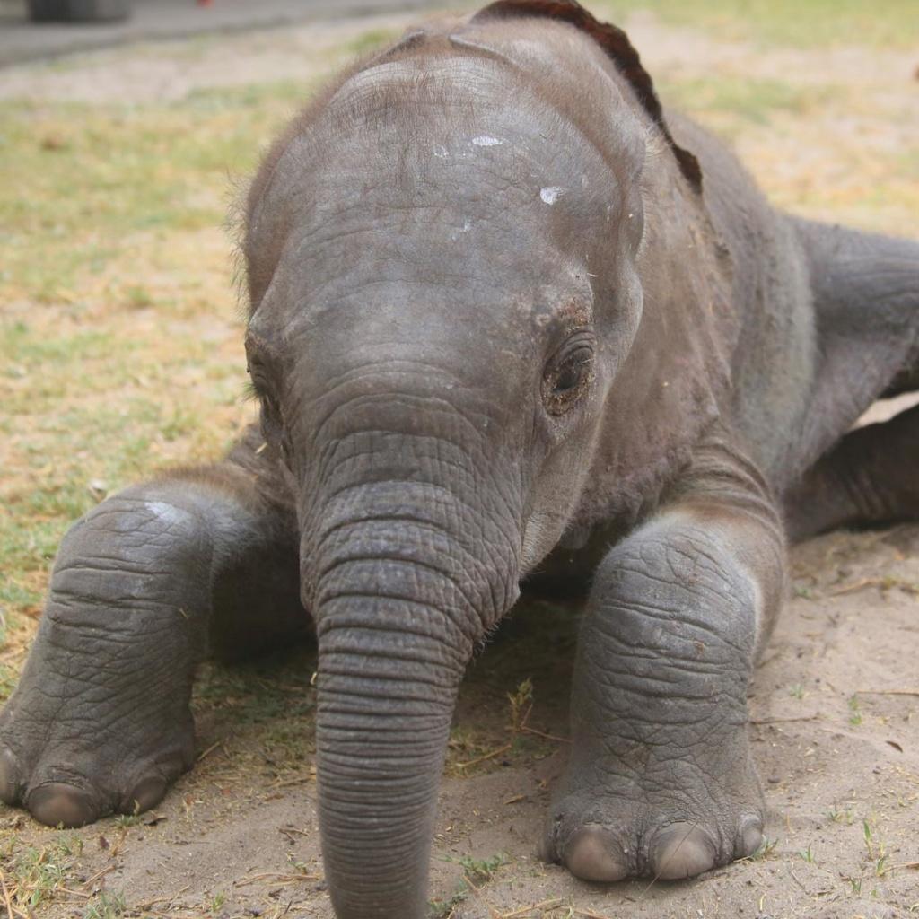 Elephant Orphans