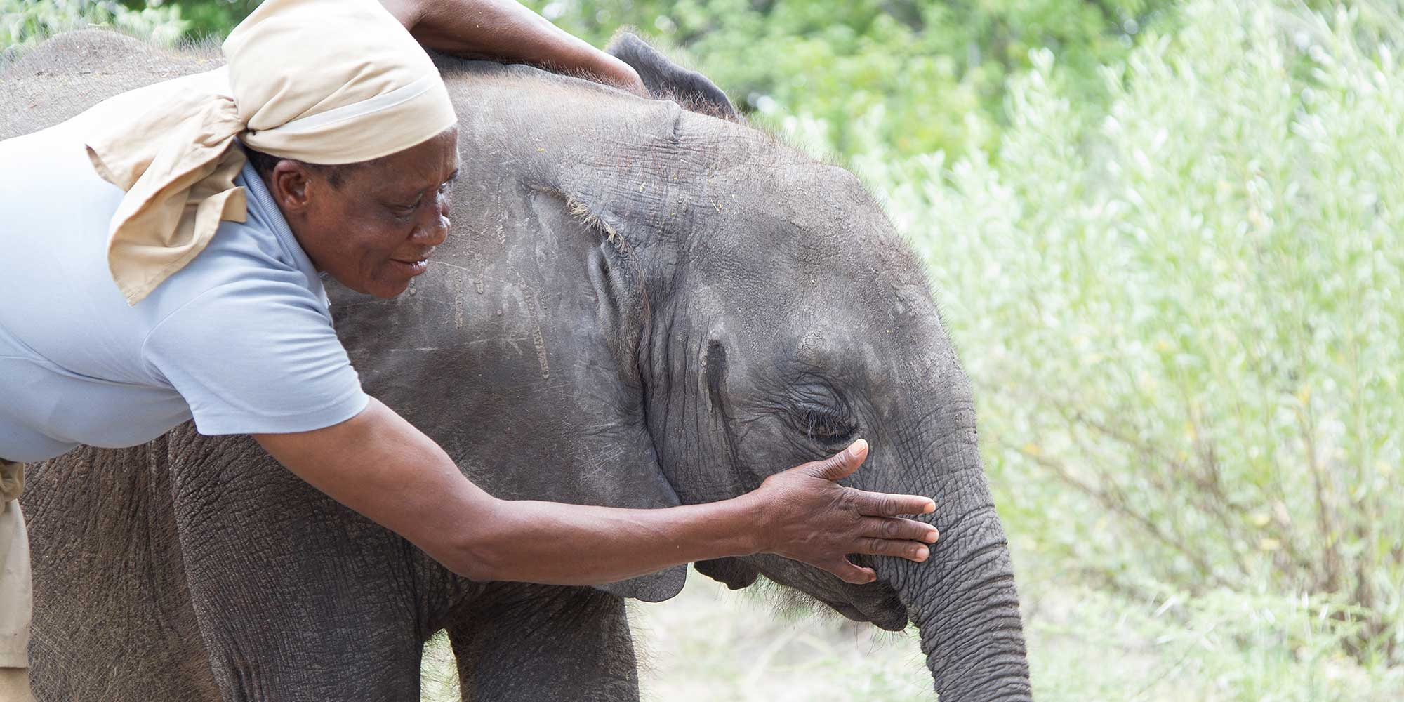 Elephant Havens Handler and Baby Elephant