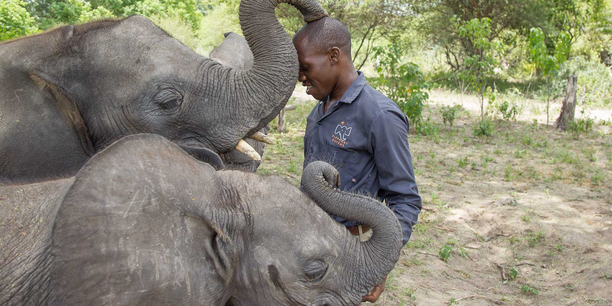 Elephant Havens Handler and Baby Elephants